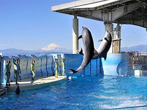 ○【特別補助・半額/チケット郵送】新江ノ島水族館