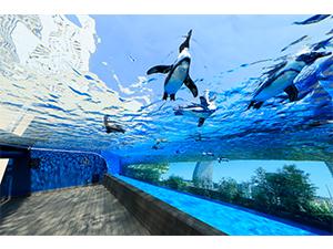 ■【チケット郵送】サンシャイン水族館